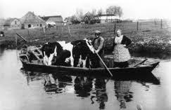 12-Zwart-Bonte-Koeien-in-praam-4